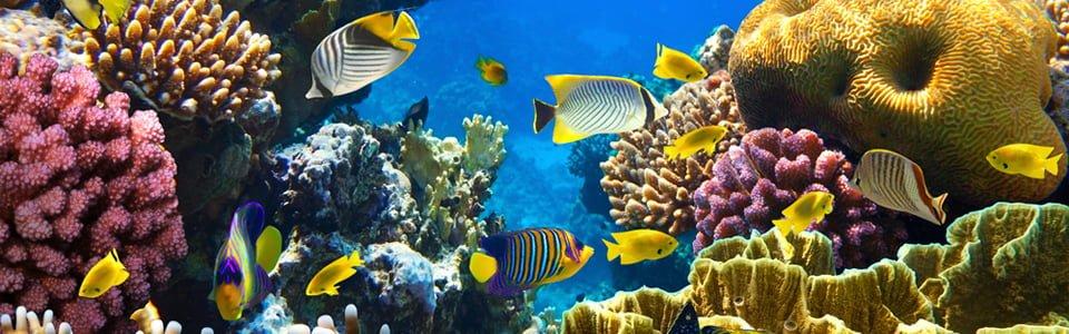 La barriera corralina e il Mar Rosso